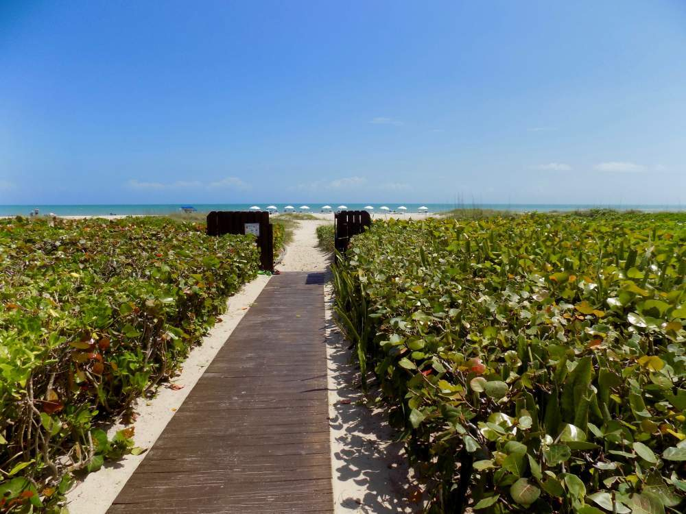 Wood plank walkway surrounded by sea grapes leading to beach